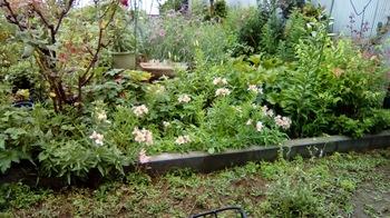 雨の庭.jpg
