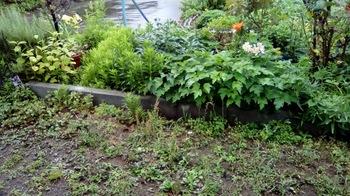 雨の庭1.jpg